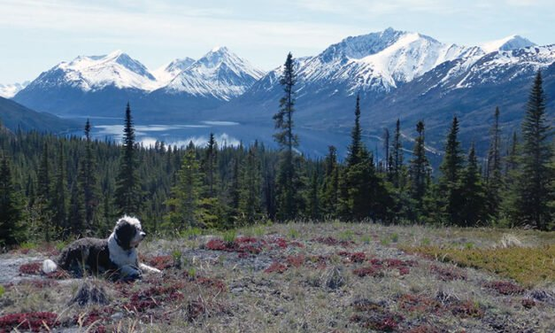 Dog Culture – Barabra Phillips
