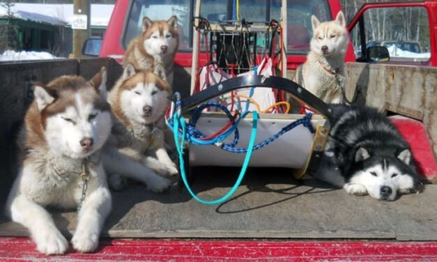 Dog Culture – Natalya Keller