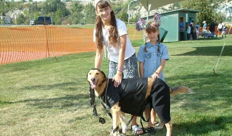 Dog Culture – Kathy Brewer