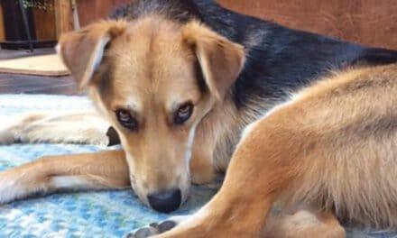 Dog Culture – Glen and Kathy Piwowar