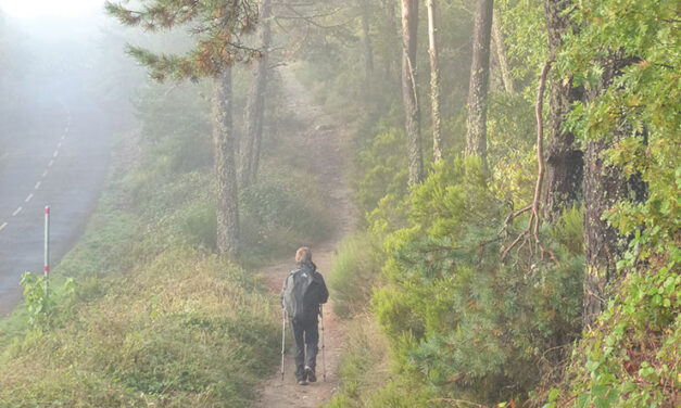 The Power of 'the camino'