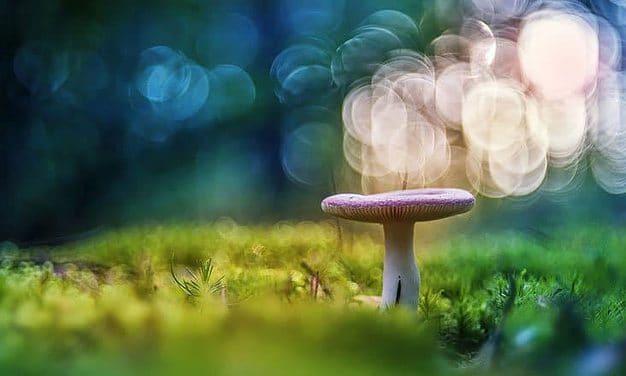 Mushrooms From the Open Fields
