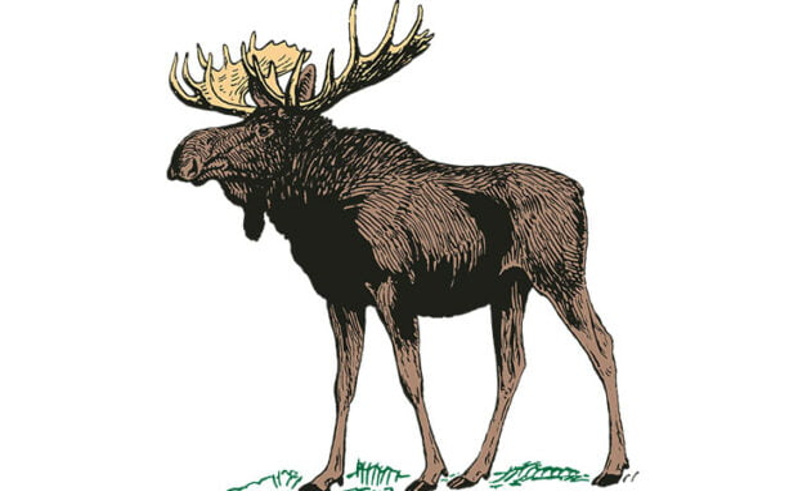 Moose round steak