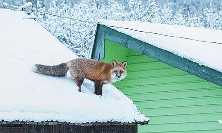 Living With Wildlife: Carolin Kleedehn