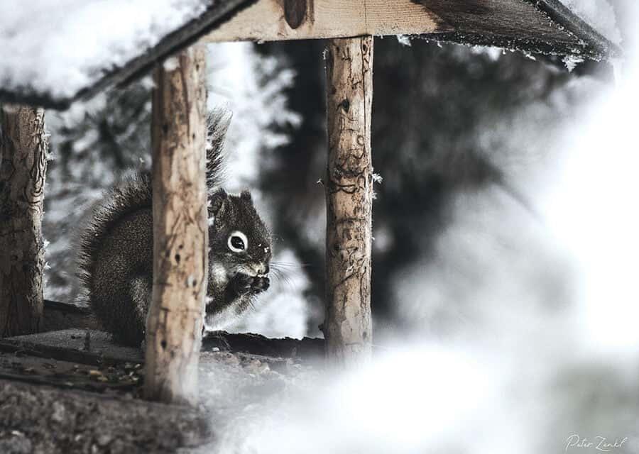 Living With Wildlife: Peter Zenkl