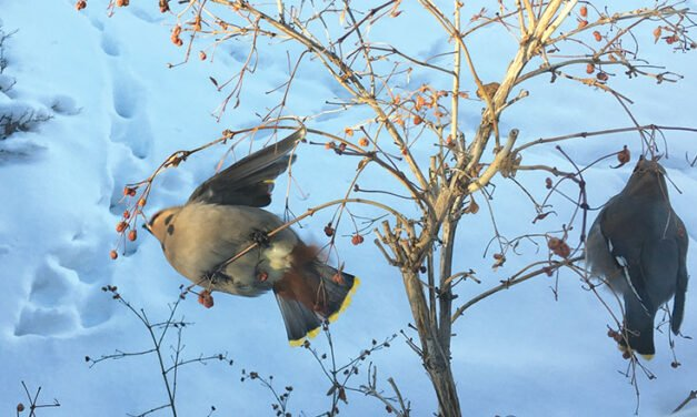 Living With Wildlife – Denise Paré