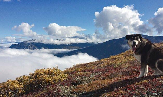 Dog Culture – Cheri-Lee Walters