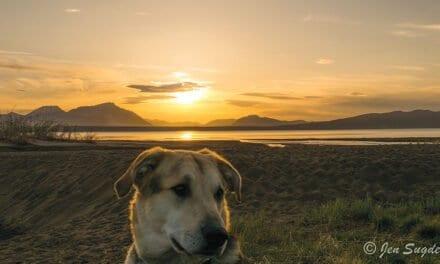 Dog Culture – Jen Sugden