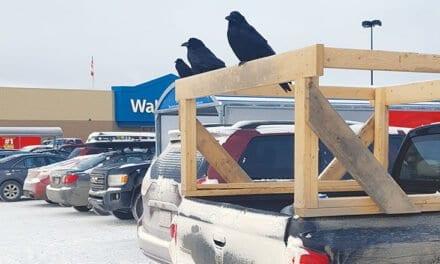 Yukon See It Here: Partick Gardiner