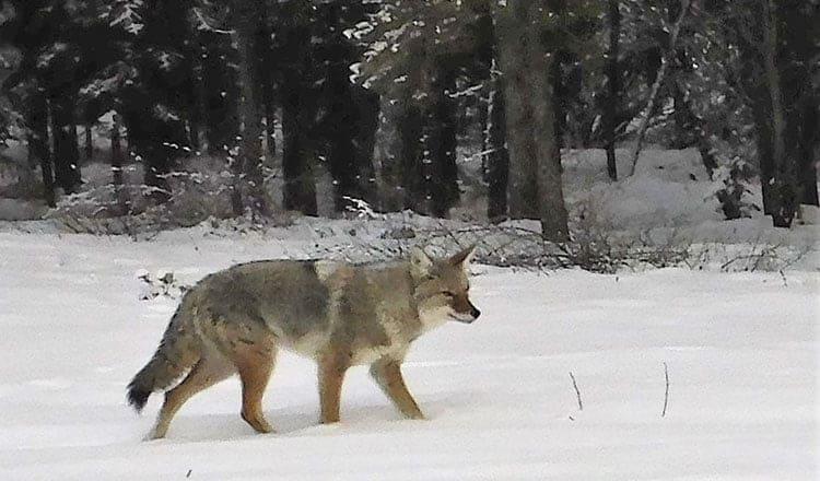 Living With Wildlife: Steve Wilson