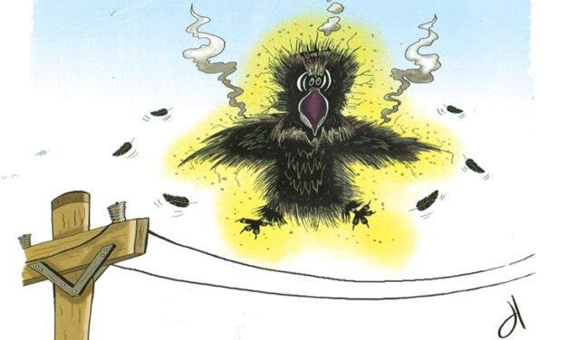 A raven conspiracy?