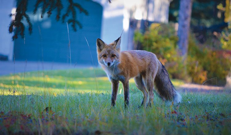 Living With Wildlife: Annie Veilleux