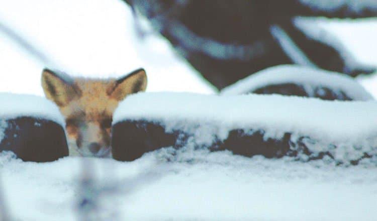 Living with Wildlife – Chris Morgan