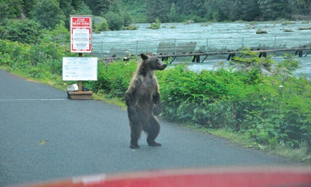 Getting to know bears