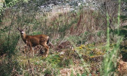 Deer hunting recipes