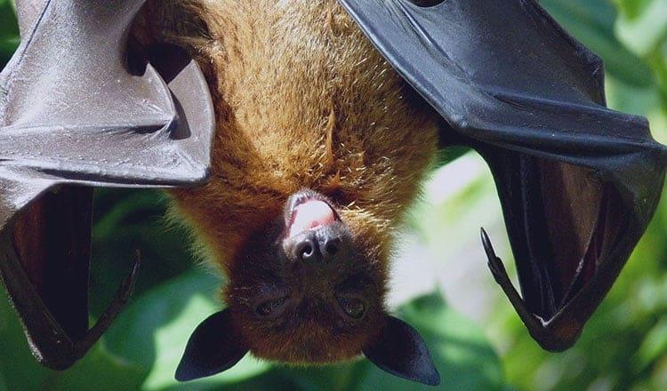 The amazing bat