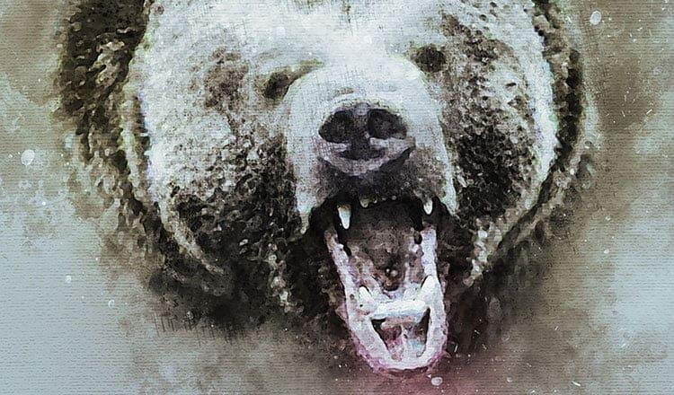Bear words