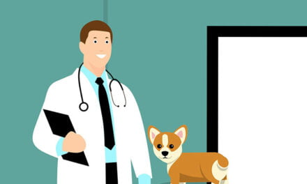 Vaxxing for canines – protecting your dog from rabies