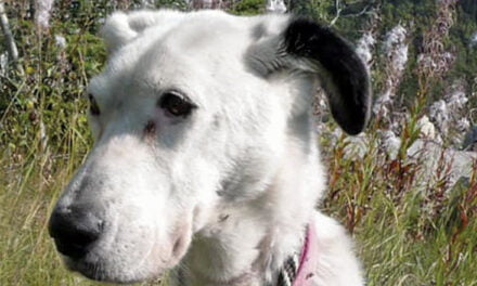 Skagway community rallies to find Alberta couple's lost dog – Part 2