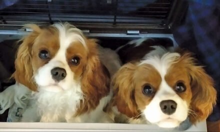 Ginny's 'Boys' – the k9 ones!