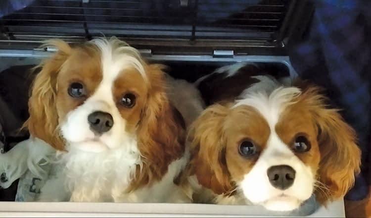 Ginny's 'Boys' – the k9 ones!