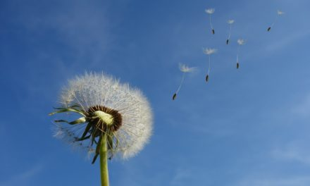 Dandelions and rituals