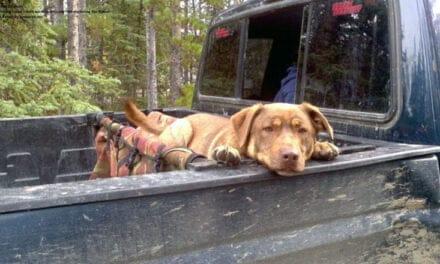 Dog Culture – Shirley Dawson