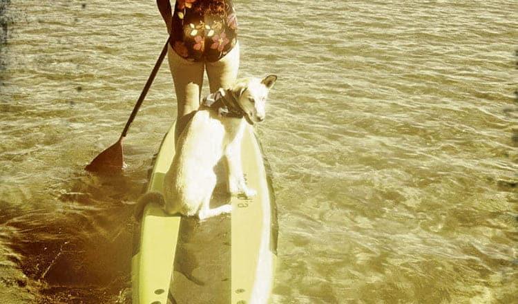 Dog Culture – Catherine Lalonde