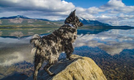 Dog Culture – R Lendvai