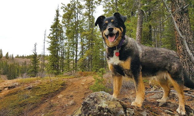 Dog Culture – Andy Paulson