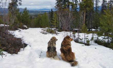 Dog Culture – Donald Graham