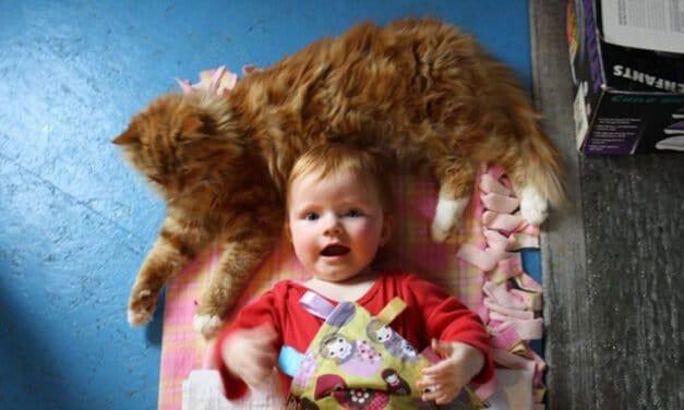 Kanye: barn cat turned baby whisperer
