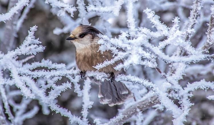 Living With Wildlife – Steve Wilson