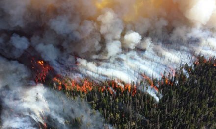 Are you prepared for a forest fire?