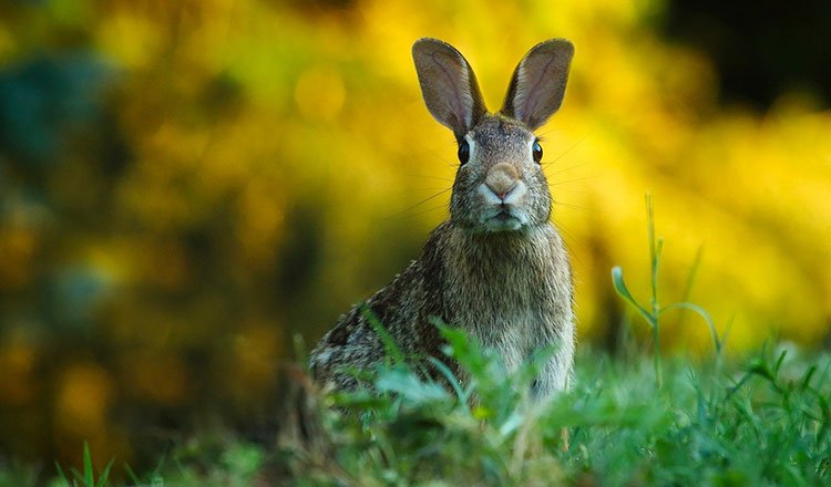 Factors in wildlife management