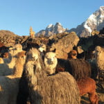 Lessons in gratitude from my life in the Andes