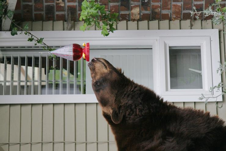 How to Avoid Tempting Hungry Bears to Your Home