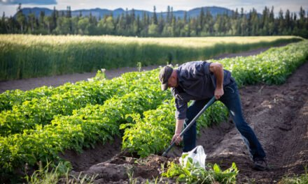 Growing young farmers
