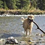 Yukon's Best Friend: Sundance