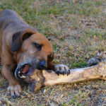 Give a dog a bone – Part 1