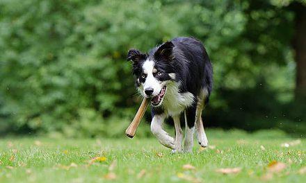 Give a dog a bone – Part 2